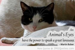 Animal's Eyes 