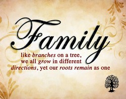 like branches on a tree, 