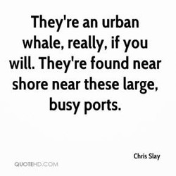 They're an urban 