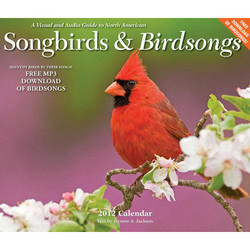 -A Visual 