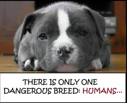 THERE IS ONLY ONE DANGEROUS BREED: HUMANS...