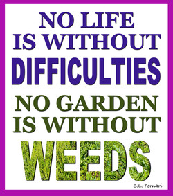NO LIFE 