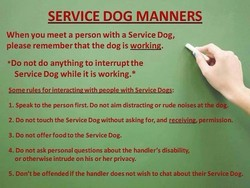 SERVICE DOG MANNERS 