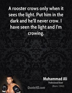 A rooster crows only when it 