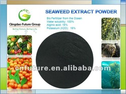 Qingdao Future Group 