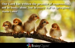 -of ro. 