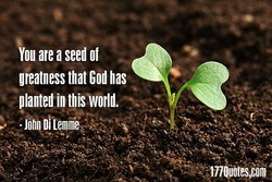 ou are a seed of 