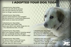 1 ADOPTED YOUR DOG TOD 