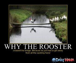 WHY THE ROOSTER 