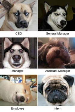 CEO 