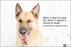 When a dog is in your 