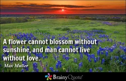 A flower cannot blossom without 