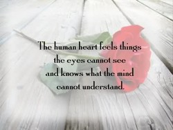 The human heart feels things 