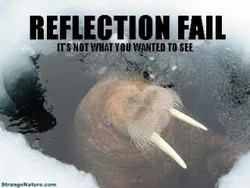 REFLECTION FAIL 