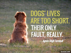 DOGS' LIVES 