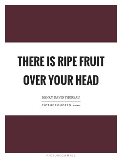 THERE IS RIPE FRUIT 