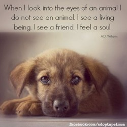 When I look into the eyes of an animal I 