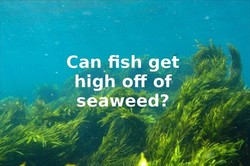 Can fish get 