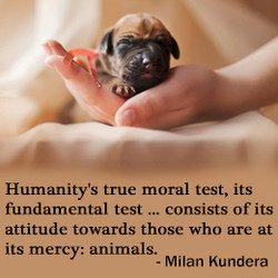Humanity's true moral test, its 