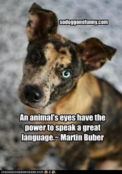 sodoggonetunnv.com 