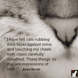 ' 'Chave felt cats rubbing 