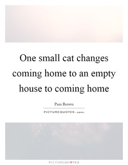 One small cat changes 