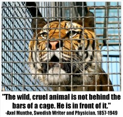 'The wild, cruel animal is not behind the bars of a cage. He is in front of it.