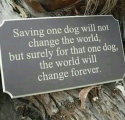 f/ 