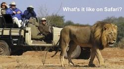 What's it like on Safari?