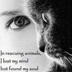 n rescuing animals, 