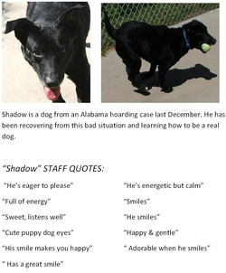 Shadow is a dog from an Alabama hoarding case last December. He has 