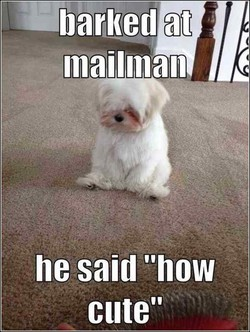 barked at 