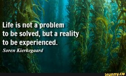Life is nofiproblem to be solved, but a reality to be experienced. Soren Kierkegaard nny.ce