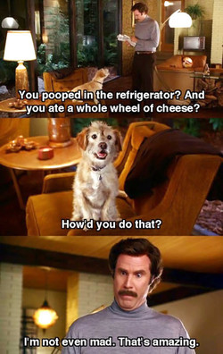 You-pooped in the refrigerator? And 