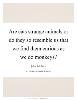 Are cats strange animals or 