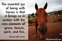 The essential ioy 