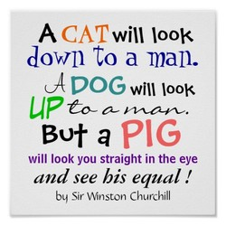 A CAT will 100B 