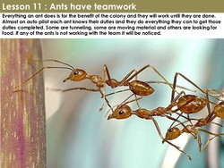 Lesson 11 : Ants have teamwork 
