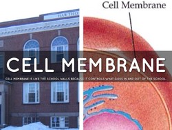 Cell Membrane 