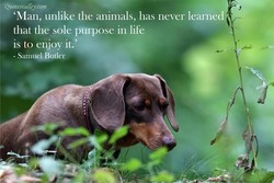 Quoteswamey.com 