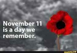 November 11 