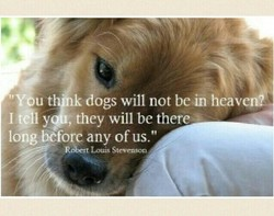dogs will not bein héalen/ I tåly , they will be there long bCforc any of us.