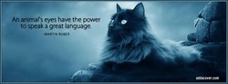 An animal's eyes have the power 