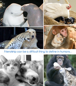 Friendship can be o difficult thing to define in humans...