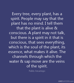 Every tree, every plant, has a 