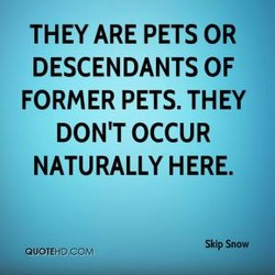 THEY ARE PETS OR 
