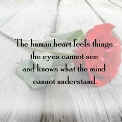 TIC Kuman heart reels {Kings 