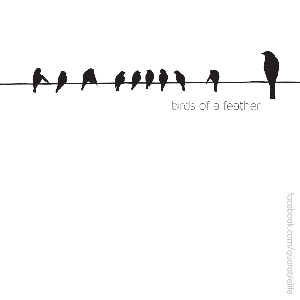 Quotes About Bird Feathers 27 Quotes