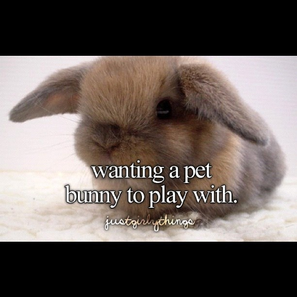 Quotes about Pet bunnies (18 quotes)