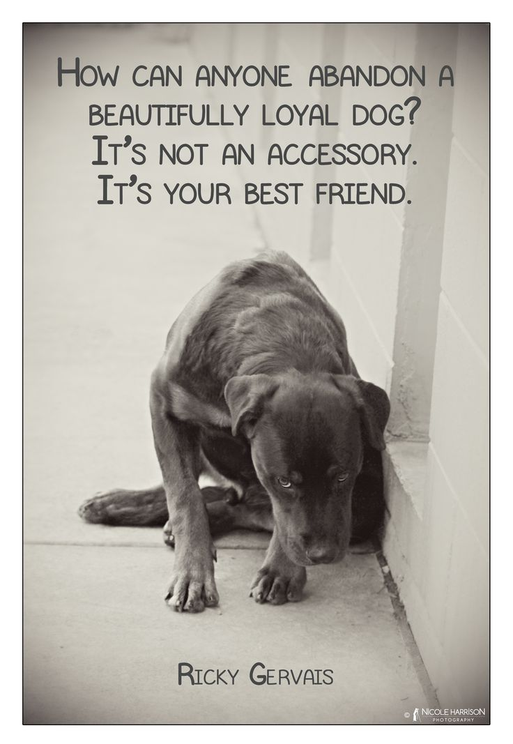 Quotes about Animal Shelter (32 quotes)